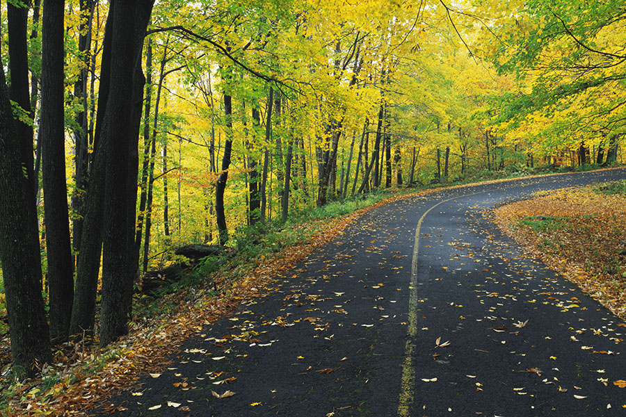 Contact - Winding Road with Colorful Tress and Fallen Leaves